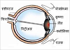 eye-parts.jpg